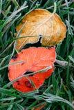 Folhas gelados Fotografia de Stock Royalty Free