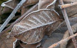 Folhas gelados Foto de Stock