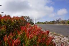 Folhas grossas vermelhas ao lado de um farol Imagens de Stock