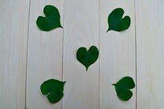 Folhas Heart-shaped imagem de stock