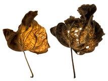 Folhas inoperantes Imagem de Stock