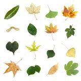 Folhas isoladas de várias árvores Fotografia de Stock Royalty Free