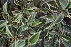 Folhas isoladas do verde Fotografia de Stock Royalty Free