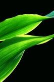 Folhas luminosas   imagens de stock royalty free