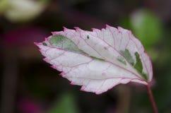 Folhas macro da cor. Fotos de Stock Royalty Free