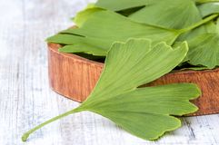 Folhas medicinais recolhidas da árvore do biloba da nogueira-do-Japão em uma bacia na tabela de madeira fotos de stock