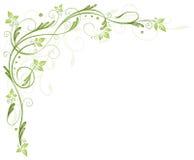 Folhas, mola, gavinha Fotografia de Stock Royalty Free