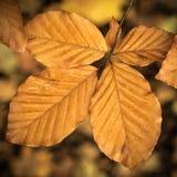 Folhas molhadas da queda Fotografia de Stock Royalty Free