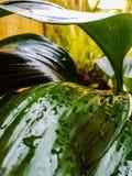 Folhas molhadas do verde fotografia de stock royalty free