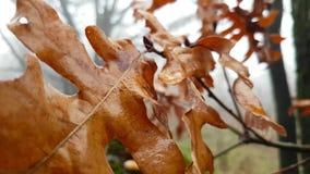 Folhas molhadas na floresta chuvosa do outono vídeos de arquivo