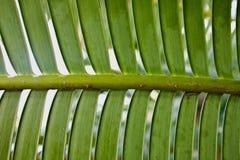 Folhas molhadas verdes isoladas no fundo branco Fotografia de Stock Royalty Free