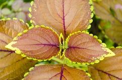 Folhas multi-coloridas bonitas Imagem de Stock