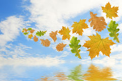 Folhas multi-coloured de voo Foto de Stock