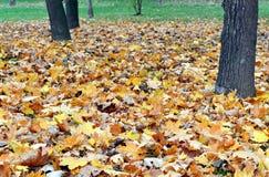 Folhas murchos A Fotos de Stock Royalty Free