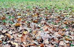 Folhas murchos B Foto de Stock Royalty Free