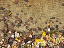 Folhas na água Foto de Stock
