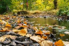 Folhas na água do córrego, outono Fotografia de Stock Royalty Free