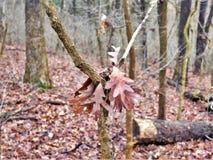 Folhas na árvore fotografia de stock