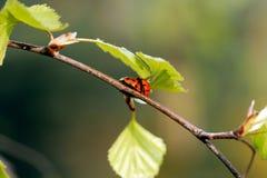 Folhas na árvore imagem de stock