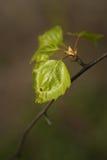 Folhas na árvore fotos de stock royalty free