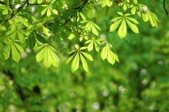 Folhas na árvore foto de stock