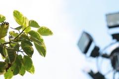 Folhas na cidade Foto de Stock