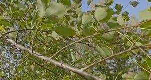 Folhas na estação do outono video estoque