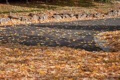 Folhas na estrada Fotos de Stock Royalty Free