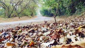 Folhas na estrada imagens de stock royalty free