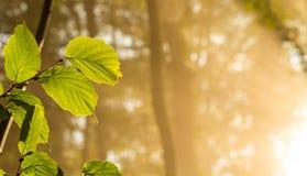 Folhas na floresta Fotografia de Stock Royalty Free