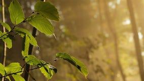 Folhas na floresta video estoque