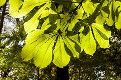 Folhas na floresta Imagem de Stock