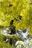 Folhas na floresta Foto de Stock