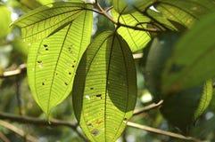 Folhas na floresta húmida Fotografia de Stock Royalty Free