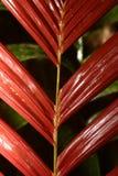 Folhas na floresta húmida Imagem de Stock Royalty Free