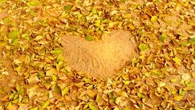 Folhas na forma do coração do amor foto de stock