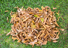 Folhas na grama Fotografia de Stock