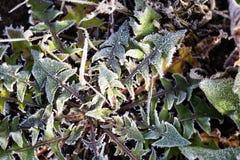 Folhas na grama no frio gelado imagem de stock royalty free