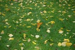 Folhas na grama verde Fotografia de Stock