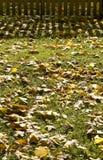 Folhas na grama verde Imagens de Stock