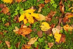 Folhas na grama verde Fotografia de Stock Royalty Free