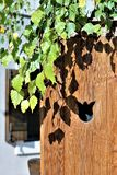 Folhas na luz da tarde do outono fotos de stock