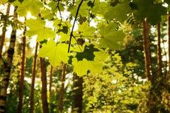 Folhas na luz solar foto de stock