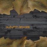 Folhas na madeira Foto de Stock