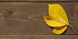 Folhas na madeira Fotografia de Stock