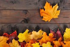 Folhas na madeira Fotos de Stock