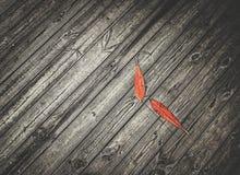 Folhas na madeira Fotografia de Stock Royalty Free