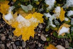 Folhas na neve fraca imagem de stock royalty free