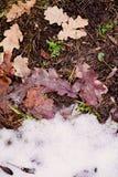 Folhas na neve outono do contraste, inverno Mudança da estação Foto de Stock