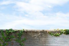 Folhas na parede Fotos de Stock